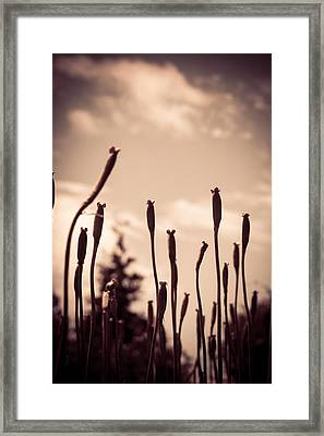 Flowers Reaching For The Sky Framed Print by Brian Caldwell