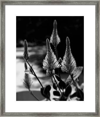Reaching For The Sky Framed Print