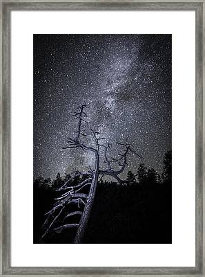 Reaching For The Stars Framed Print