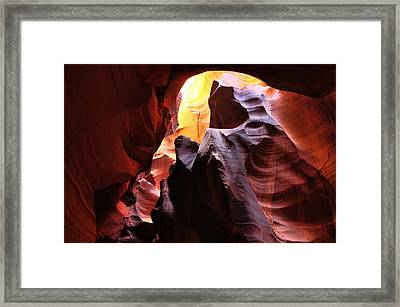 Framed Print featuring the photograph Reaching For The Sun by Dan Myers
