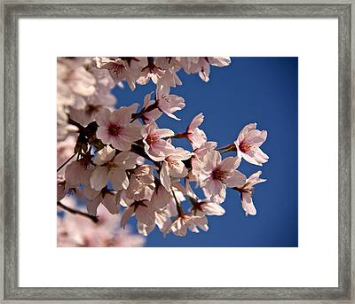 Reaching For The Sun Framed Print by Kathi Isserman