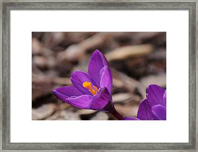 Reaching For The Sun Framed Print
