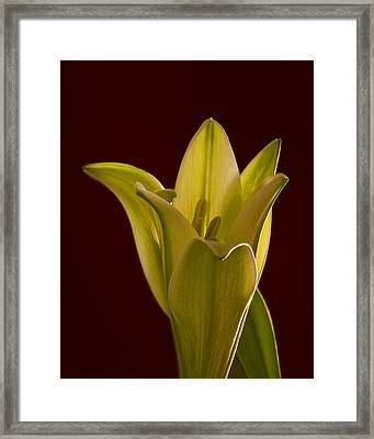 Reaching From The Earth Framed Print by Don Wolf