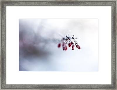 Reaching Out Framed Print by Aaron Aldrich