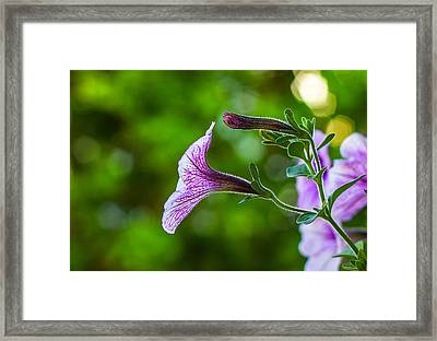 Reaching Out Framed Print by Joshua Blash