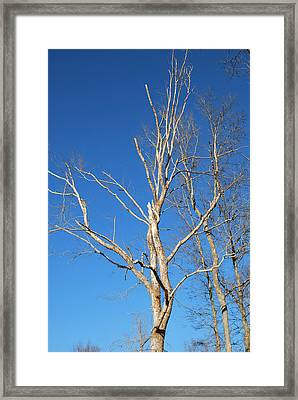 Reaching Out Framed Print by Linda Segerson