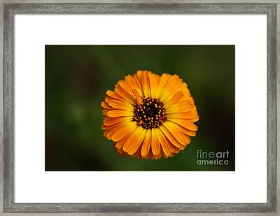 Reaching Out Framed Print by Syed Aqueel