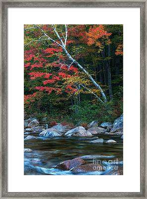 Autumn Foliage Along The Swift River Framed Print by Thomas Schoeller