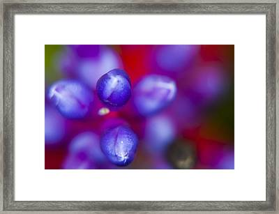 Reaching Out Framed Print by Tina Pitsiavas