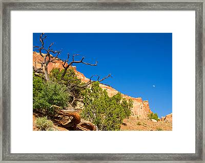 Reaching Out To The Moon Framed Print