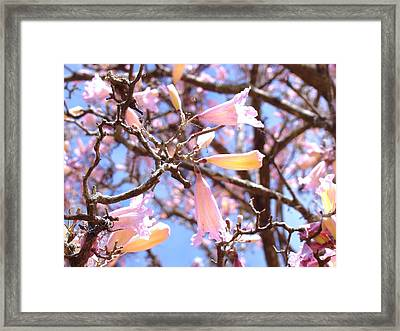 Reaching Out Framed Print by Van Ness