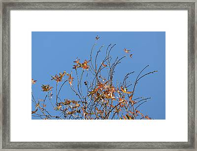 Reaching Right Framed Print