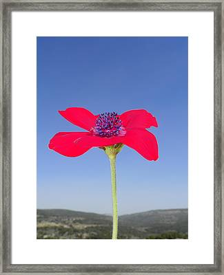 Reaching The Sky Framed Print by Noreen HaCohen