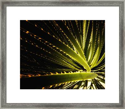Reaching The Stars Framed Print