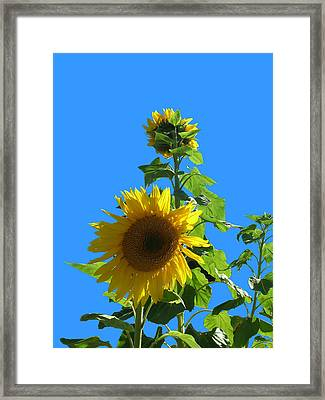 Framed Print featuring the photograph Reaching To The Sky by Bonnie Muir