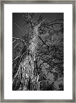 Framed Print featuring the photograph Reaching To The Sky by Greg Jackson