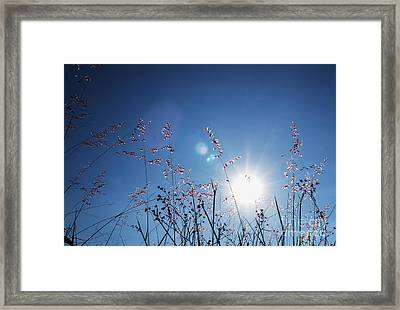 Reaching To The Sun Framed Print