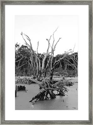 Reaching Up Framed Print by Thomas Leon