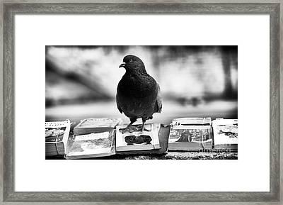 Reading Is For The Birds Framed Print