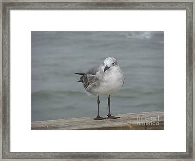 Framed Print featuring the photograph Ready by Deborah DeLaBarre