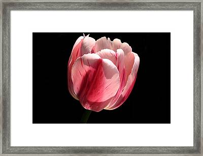 Ready Framed Print
