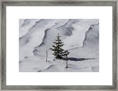 Ready For Christmas Framed Print by Ernie Echols