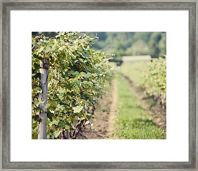 Ready For Harvest  Framed Print by Lisa Russo