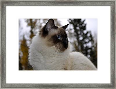 Ready For My Closeup Framed Print by Cathy Mahnke