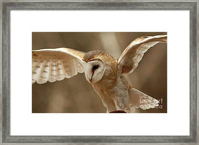 Ready For Take Off Barn Owl In Flight Framed Print