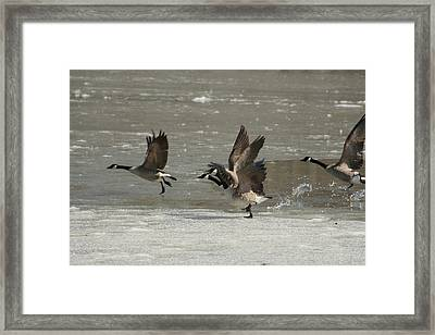 Ready For Take Off Framed Print by Frederic Vigne