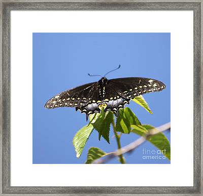 Ready For Take-off Framed Print by French Toast