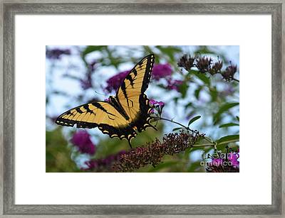 Ready For Take Off Framed Print by Judy Wolinsky