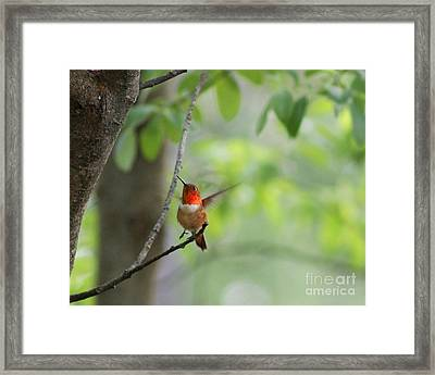 Ready For Take-off Framed Print