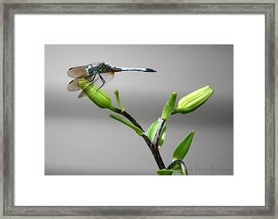 Ready For Takeoff Framed Print by Anne Babineau