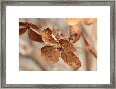 Ready For Takeoff  Framed Print by Connie Handscomb