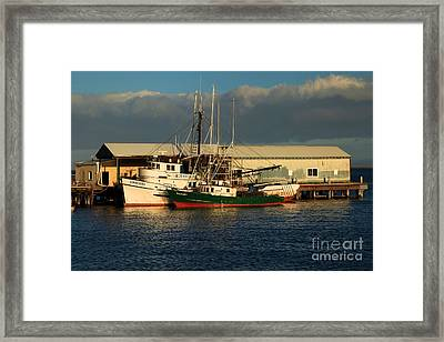 Ready For The Day Framed Print by Adam Jewell