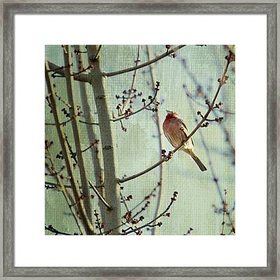 Ready For The Day Framed Print
