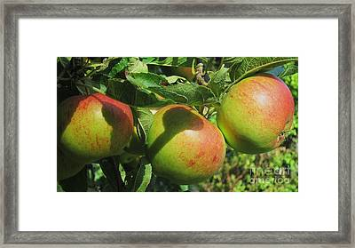 Ready Framed Print by John Clark