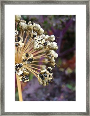 Ready To Disperse Framed Print by Cheryl Hoyle