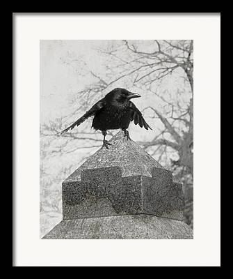 Gothicolors With Crows Framed Prints