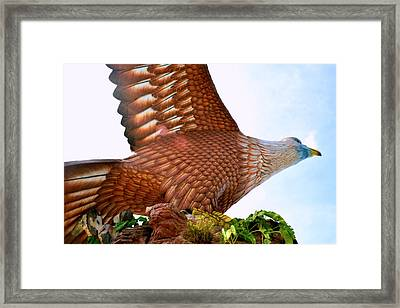 Ready To Fly. Framed Print