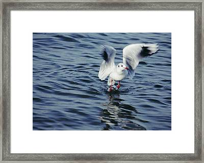 Ready To Fly Framed Print by SYoung Photography