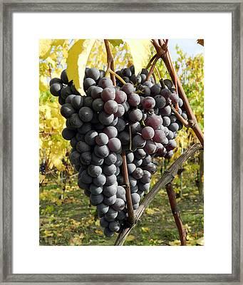 Ready To Harvest Framed Print by Carolyn Waissman
