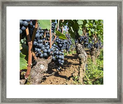Ready To Harvest Framed Print by Georgia Fowler
