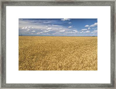 Framed Print featuring the photograph Ready To Harvest by Rob Graham
