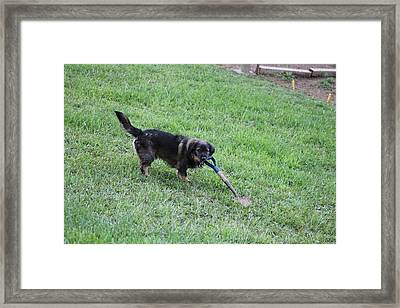 Ready To Help Framed Print by Margo Miller