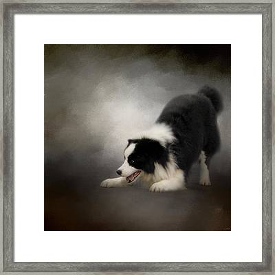 Ready To Play - Border Collie Framed Print by Jai Johnson