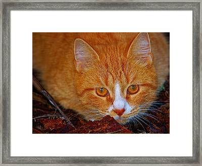 Ready To Pounce Framed Print