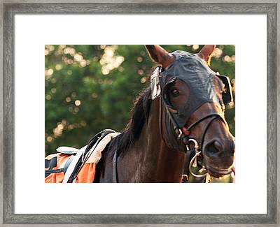 Ready To Race Framed Print