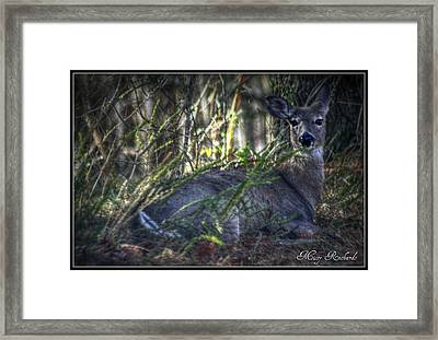 Ready To Rest Framed Print by Missy Richards